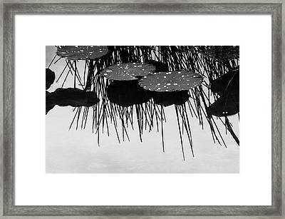 Plant Abstract Framed Print by Carolyn Dalessandro