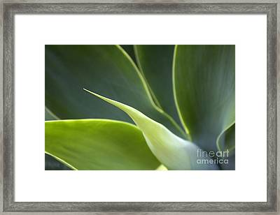 Plant Abstract Framed Print