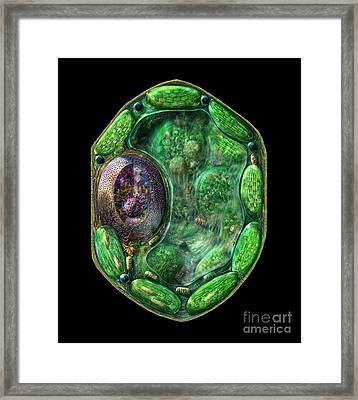 Framed Print featuring the digital art Plant Cell by Russell Kightley