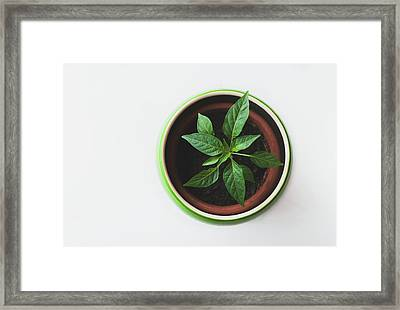 Plant Framed Print by Happy Home Artistry