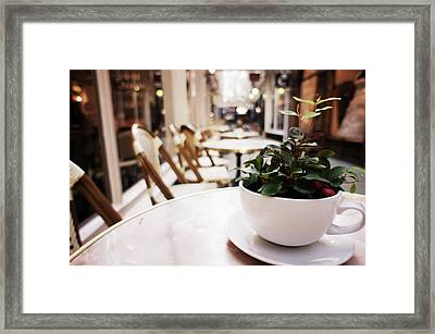 Plant In A Cup In A Cafe Framed Print