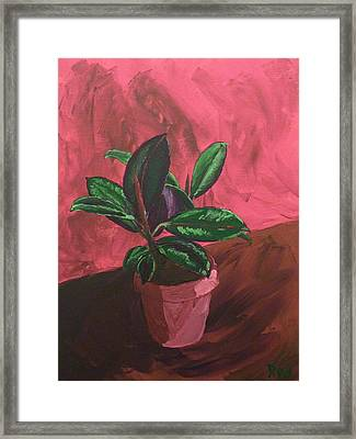 Plant In Ceramic Pot Framed Print by Joshua Redman