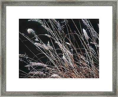 Plant Framed Print by Mikki Cucuzzo
