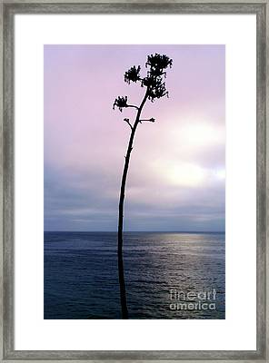 Framed Print featuring the photograph Plant Silhouette Over Ocean by Mariola Bitner