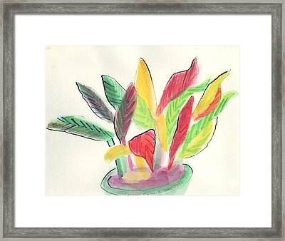 Plant With Vase Framed Print by Suzanne  Marie Leclair