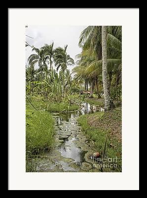 Restored Plantation Framed Prints