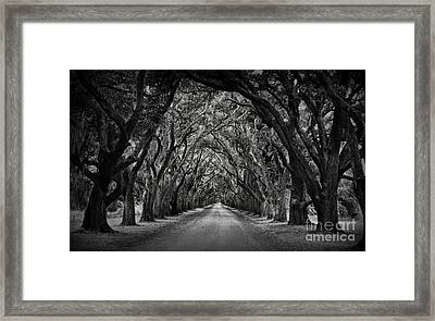 Plantation Oak Alley Framed Print