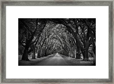 Plantation Oak Alley Framed Print by Perry Webster