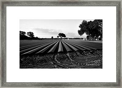 Planted Fields Framed Print by David Lee Thompson
