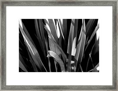 Planted Framed Print by Jez C Self