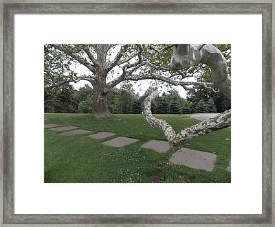 Planted Many Years Ago Framed Print