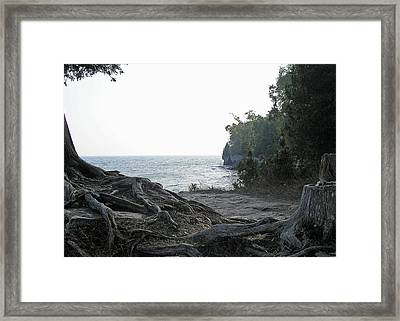 Planted  Framed Print by Terence McSorley
