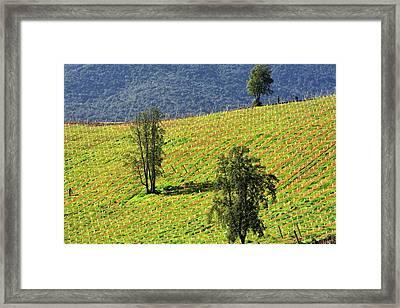 Planting A Vineyard Framed Print by Fernando Lopez Lago