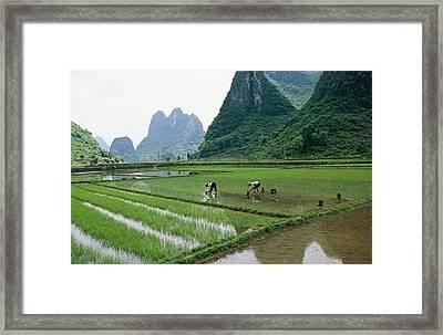 Planting Rice With Limestone Karst Framed Print by Raymond Gehman