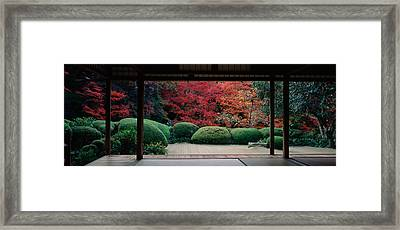 Plants And Maple Trees Viewed Framed Print by Panoramic Images
