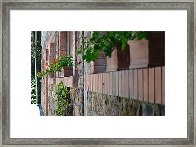 Plants In Windows Framed Print