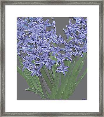 Plaster Hyacinth Framed Print by Debra     Vatalaro