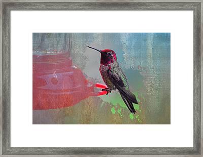 Plate 031 - Hummingbird Grunge Series Framed Print