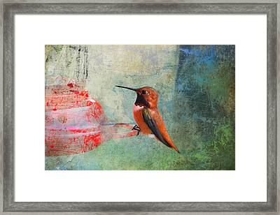 Plate 048 - Hummingbird Grunge Series Framed Print