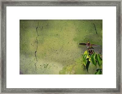 Plate 087 - Hummingbird Grunge Series Framed Print
