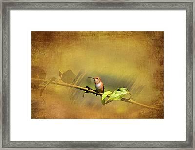 Plate 112 - Hummingbird Grunge Series Framed Print