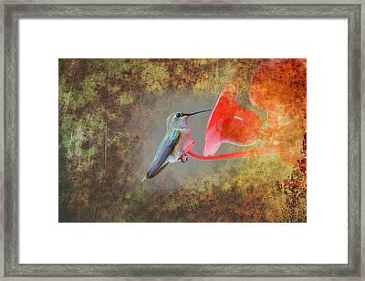 Plate 153 - Hummingbird Grunge Series Framed Print
