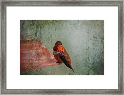 Plate 164 - Hummingbird Grunge Series Framed Print