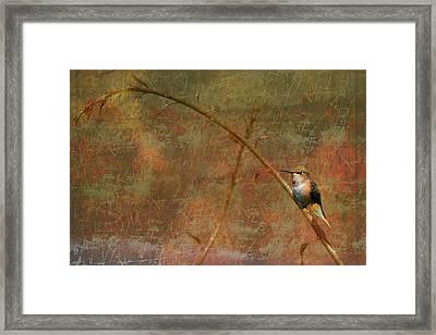 Plate 225 - Hummingbird Grunge Series Framed Print