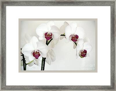 Platnum Beauty Orchids Framed Print by Marsha Heiken