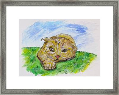 Play With Me Framed Print by Clyde J Kell