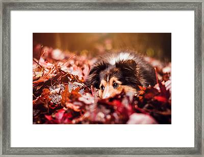 Playful Autumn Dog Framed Print