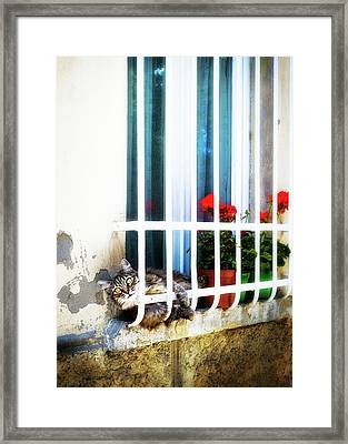 Playful Cat On Window Sill In Italy Framed Print