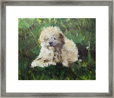 Playful Companion Framed Print by Pradeep Bangalore