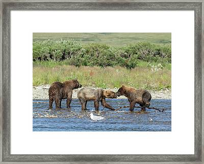 Framed Print featuring the photograph Playful Cubs by Cheryl Strahl