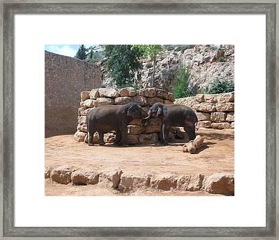 Playful Elephants Framed Print by Susan Heller