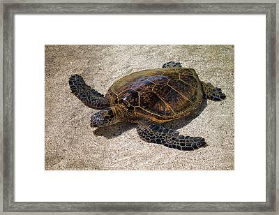 Playful Honu Framed Print