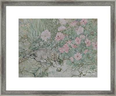 Playful Kitten Framed Print