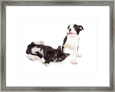 Playful Kitten And Puppy Playing Framed Print
