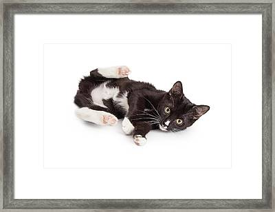 Playful Kitten With Back Legs Up Framed Print