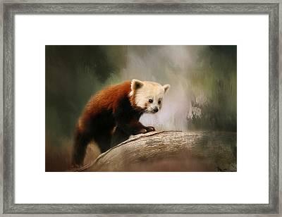 The Panda Red Framed Print by Kim Hojnacki