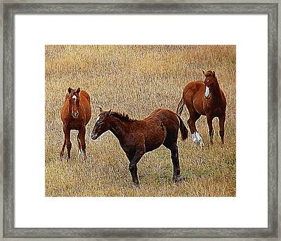 Playful Ponies Digital Art Framed Print