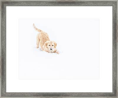 Playful Puppy In So Much Snow Framed Print