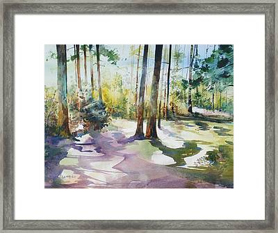 Playful Shadows Framed Print