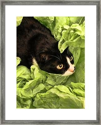 Playful Tuxedo Kitty In Green Tissue Paper Framed Print