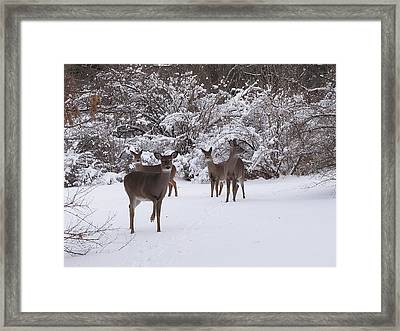 Playing In The Snow Framed Print by Scott Hovind
