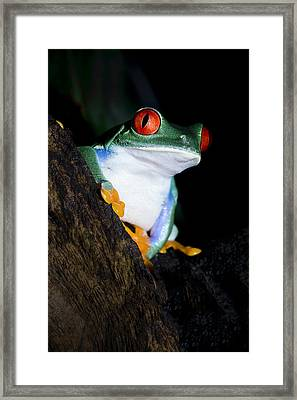 Playing It Cool Framed Print