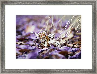 Playing Lions Framed Print by Stephanie Shondrick