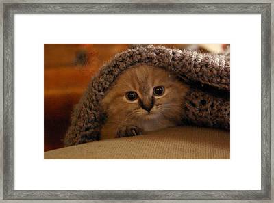 Playing Peek-a-boo Framed Print