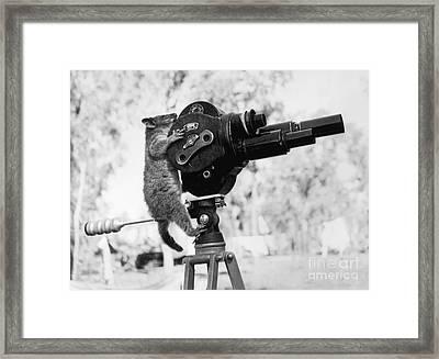 Playing Possum  Framed Print by Jon Neidert