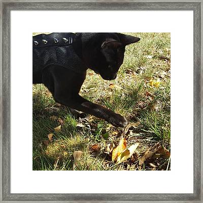 Playing With Fall Foliage  #falloffame Framed Print
